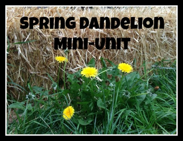 Spring unit for dandelion nature study