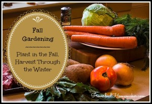 Great tips and tricks for fall gardening for a winter harvest!