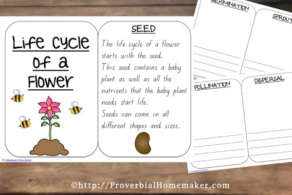 Flower Life Cycle 6