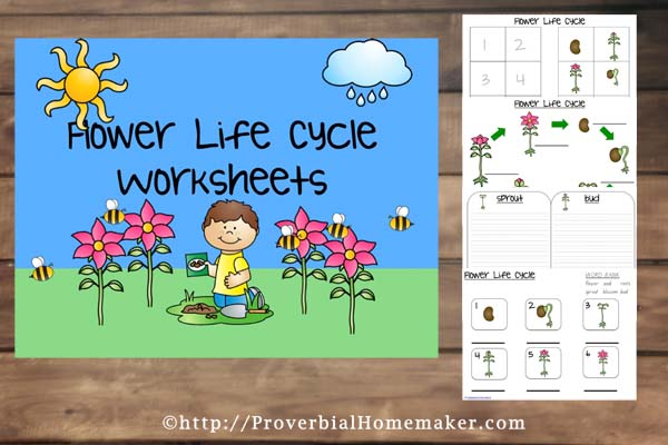 Flower Life Cycle Worksheets