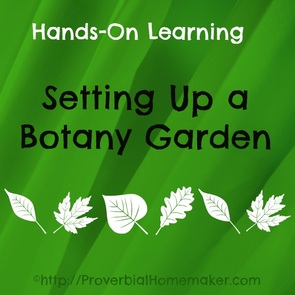 Hands-On Learning: Setting Up a Botany Garden