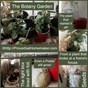 botany garden 3