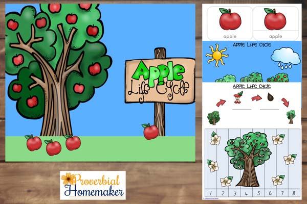 Apple Life Cycle 1
