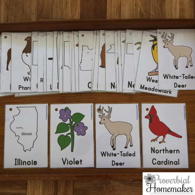 US State Cards - State shape, name, flower, animal, and bird for each state