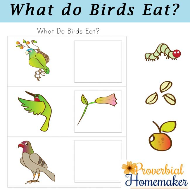 Birds And Their Food Printable Pack on Printable Numbers