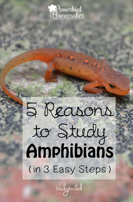 Study amphibians for a fun and memorable homeschooling activity! Here are a few easy steps to get you started.