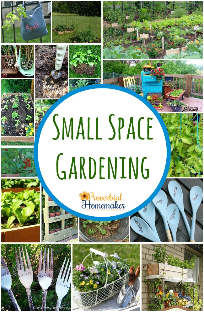 Small Space Gardening (20+ Great Ideas) - Proverbial Homemaker