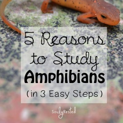 5 Reasons to Study Amphibians