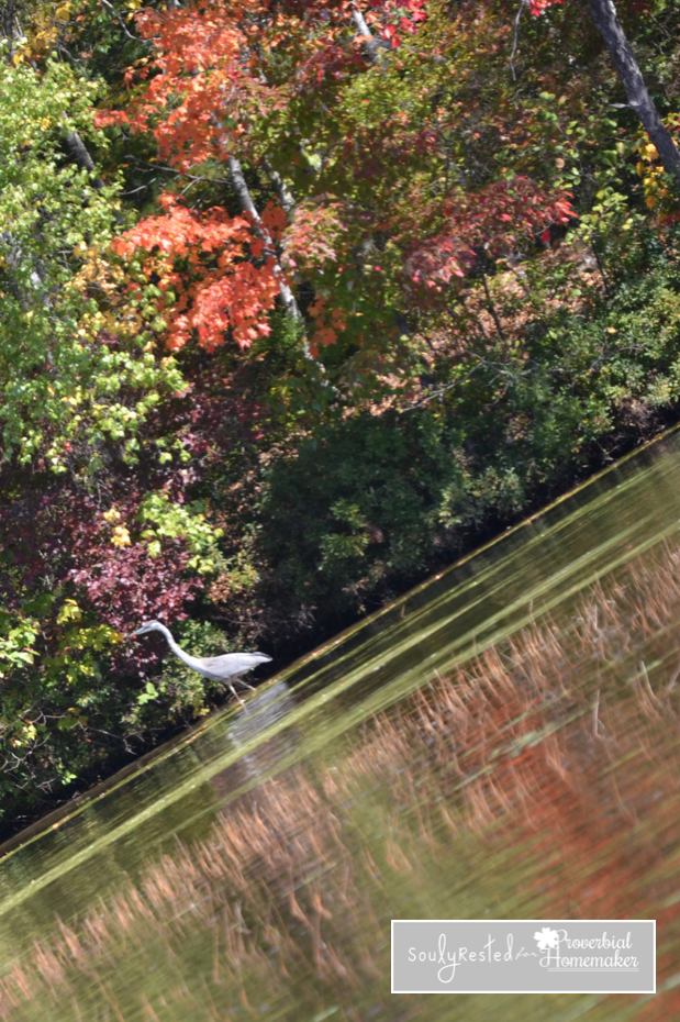 A Heron and Fall Leaves