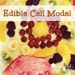 Edible Cell Model: Our Cell Science Unit