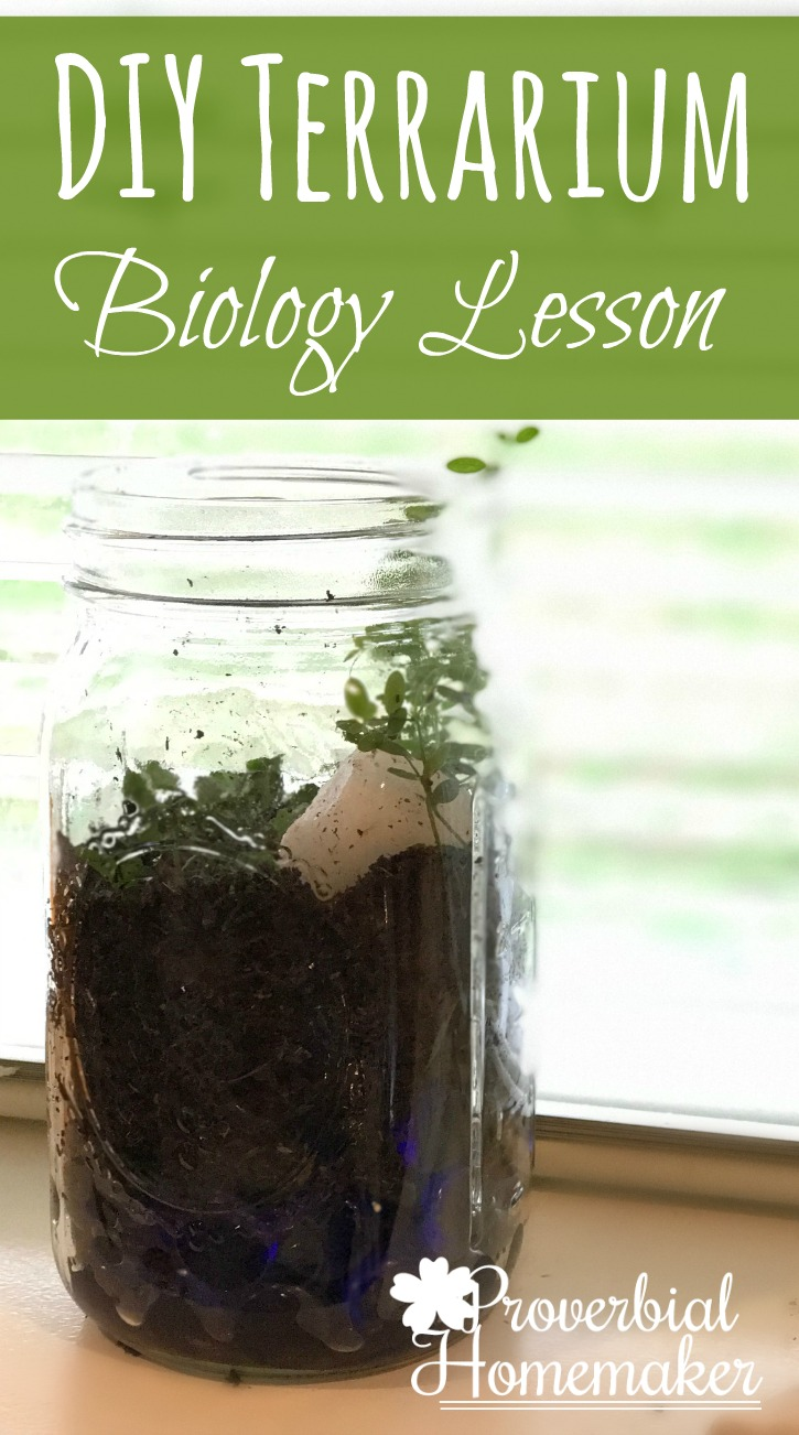 A simple and fun DIY Terrarium biology project! Great homeschooling lesson to go along with a plant unit.