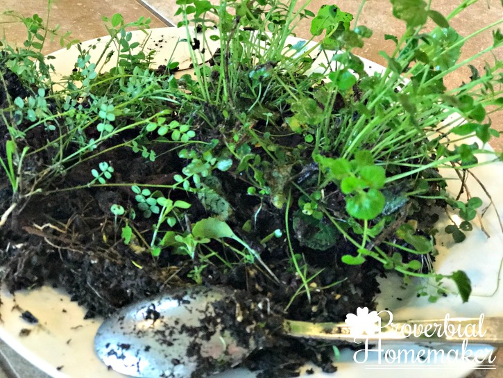 DIY Terrarium - collecting plant and rock materials from the back yard is a frugal solution!