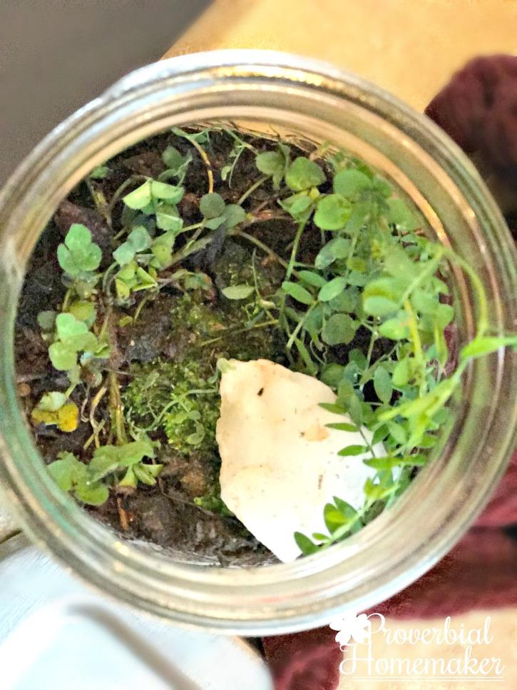 DIY Terrarium - arranging plants and rocks in a simple terrarium project
