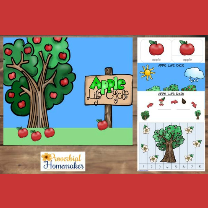 It's apple time! Apples are one of our favourite fruits, the smell of freshly picked apples is fabulous. To celebrate, I have made this Apple Life Cycle printable pack. With over 30 pages, this printable pack includes activities aimed for toddlers, preschoolers and kindergarteners.