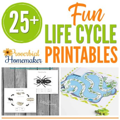 25+ Fun Life Cycle Printables