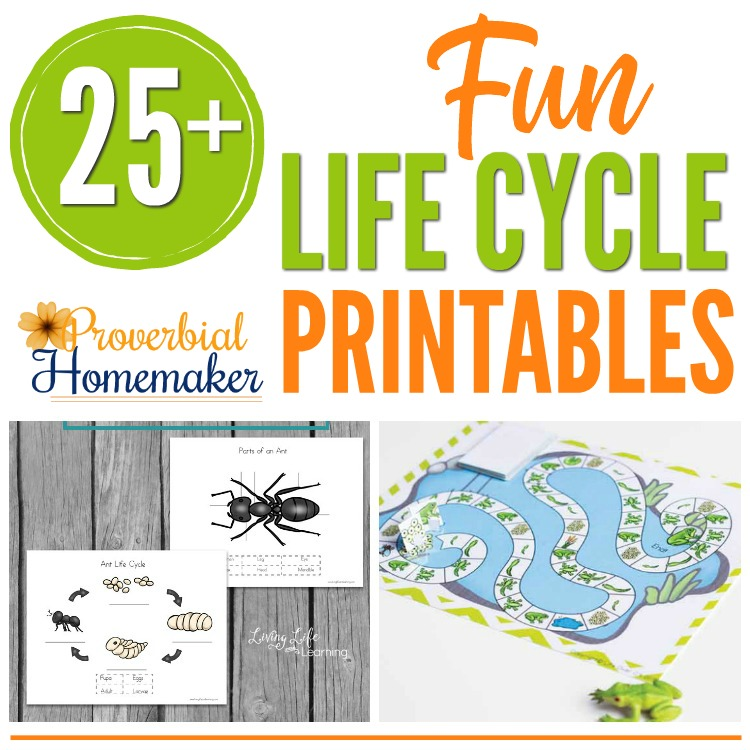 graphic relating to Butterfly Life Cycle Printable Book named 25+ Enjoyment Daily life Cycle Printables - Proverbial Homemaker