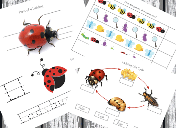 The Grouchy Lady Bug Unit Study with Printables - part of the Children's Literature Unit Study series on ProverbialHomemaker.com