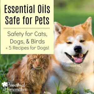 Wondering about essential oils safe for pets? Find out what you can and can't use for dogs, cats, and birds, and get 5 bonus recipes to use with dogs!