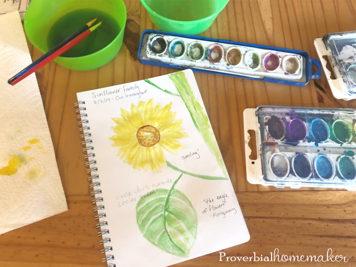 A simple and fun sunflower nature study and nature journal entry.